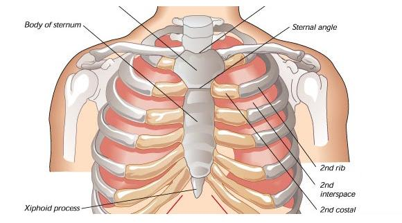 O que costocondriteminuto ligado for Esterno e um osso irregular